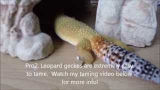 Pros & Cons of Owning a Leopard Gecko