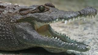 Amazing Animal Facts - Facts About Animals - Things You Didn't Know - Crazy Animal Facts