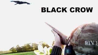 Belle matinée de chasse aux corbeaux avec le P12 BlackCrow de Verney-Carron