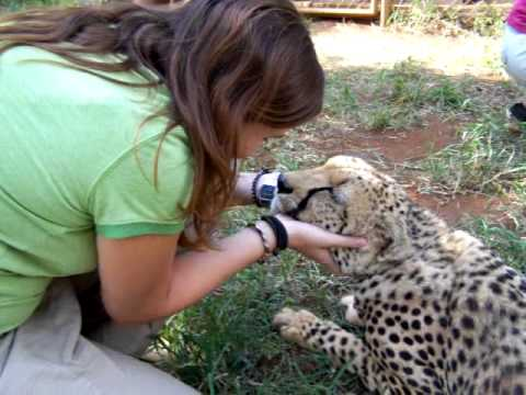 woman petting a cheetah