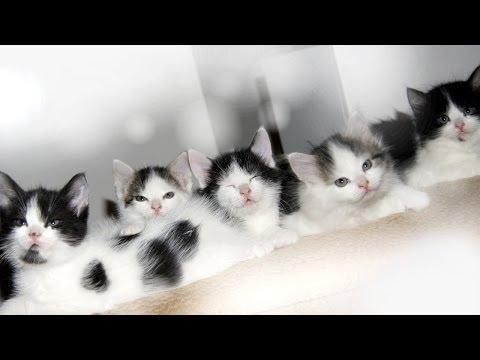 MANY CUTE BABY KITTENS!!! :)