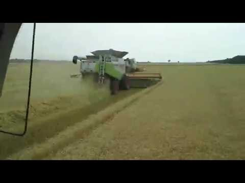 Harvest Austria 2015, cutting some organic wheat over the borderline in Hungary