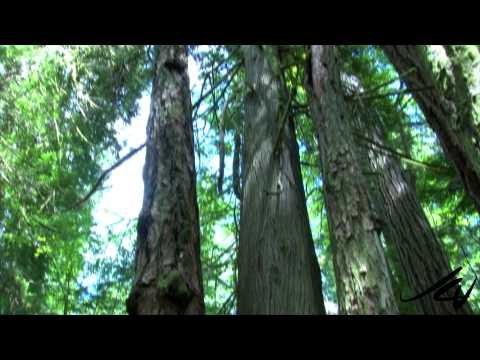 MacMillan Provincial Park, Vancouver Island  -  Giant Red Cedar Forest - YouTube