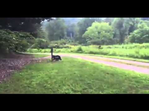 Video: Tourist claims Bigfoot sighting in Henderson County