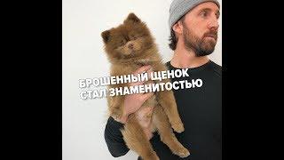 Брошенный щенок стал самой милой звездой Сети