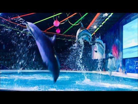 Dolphin show / Dubai dolphinarium / Dolphin dancing / Seal show