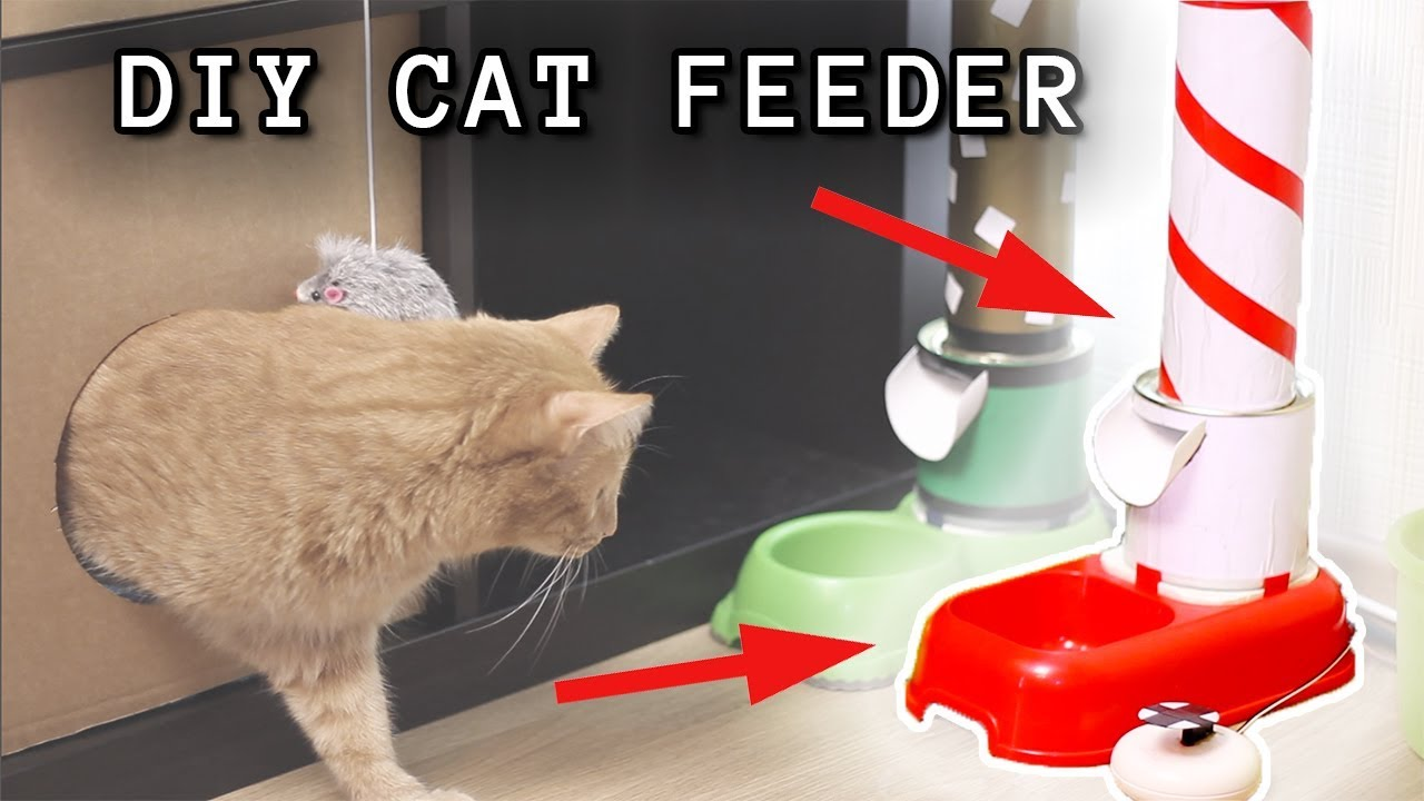How To Build A Smart Arduino Cat Feeder Youtube