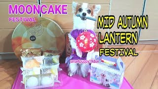 Desperate Dog Used Superpower To Earn Mooncake on this Mid Autumn Lantern Festival