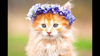 Котята могут заразить своих владельцев смертельной болезнью.