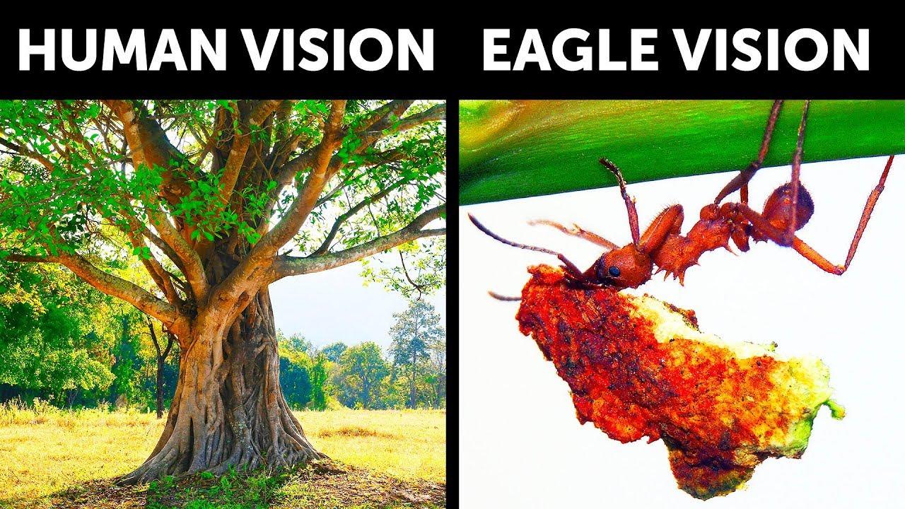 E se tivéssemos a Eagle Vision + vídeo