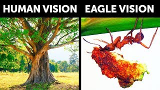 What If You Had Sharp Eagle Vision