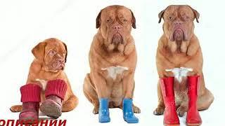 Авито обувь для собак
