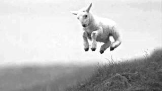 Pauline Scanlon ~ The Lambs on the Green Hills