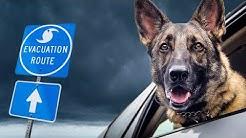 Pet Emergency Preparedness Kit: Don't Fail to Plan