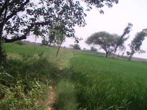 agri land ammapet