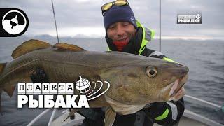 Зачетная треска Зимняя рыбалка Норвегия Планета рыбака