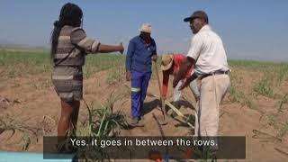 Living Land - Episode 24: Sweet Success