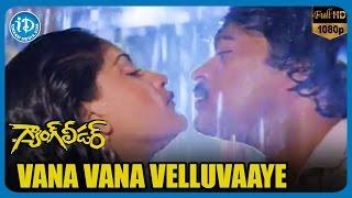 Gang Leader Video Songs - Vana Vana Velluvaaye | Chiranjeevi | Vijayashanti | Bappi Lahari