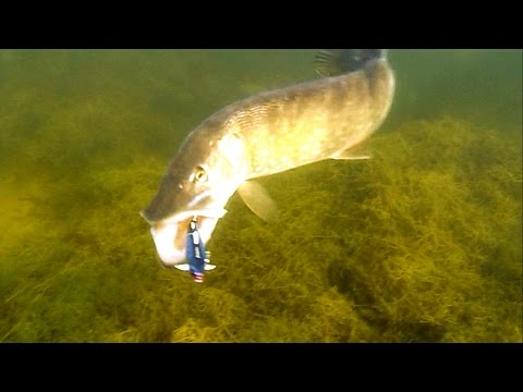 hook up bait n tackle