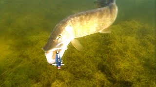 Cool: best fish attacks underwater. Fishing lures for pike muskie zander perch. Рыбалка Атака щуки.