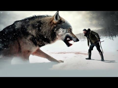 Еще немного и волк загрыз бы старика, но даже голодные волки помнят добро...