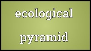 Ecological pyramid Meaning