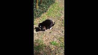 Cat rapes dog