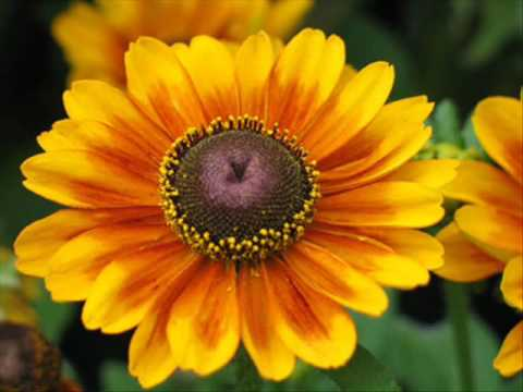 Yellow Flowers Beautiful Flower Images Pics Photos - YouTube