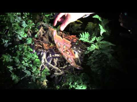 Notte delle Farfalle 2013 – Casa delle Farfalle di Bordano