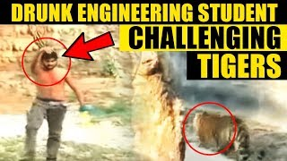 Video: Drunk student challenging tigers in India