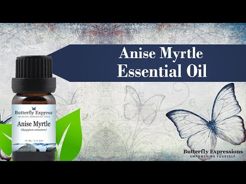 anise-myrtle-essential-oil