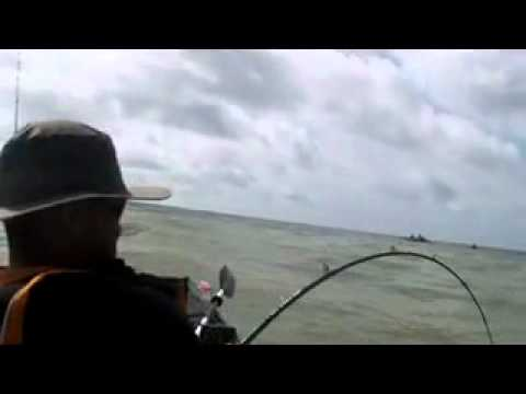 Rollover pass bay fishing and sharks youtube for Rollover pass fishing report