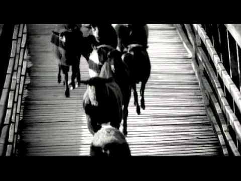 Harley davidson black sheep ad