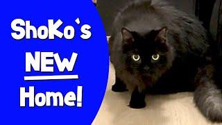 ShoKo's NEW Home!