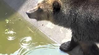 Braniewo, niedzwiedzie w zoo
