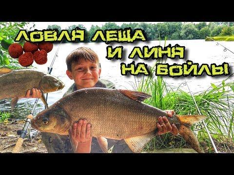 Ловля леща и линя на бойлы - Летняя рыбалка на озере