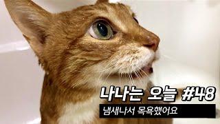 만20세 고양이 브이로…
