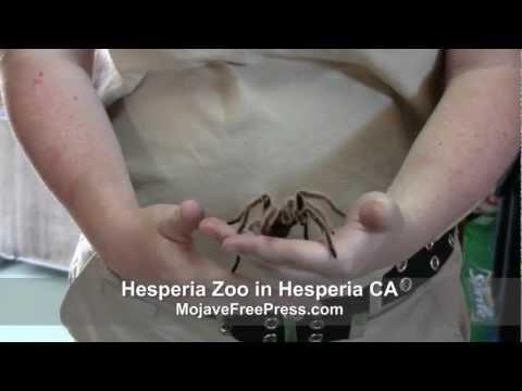 Exotic Animals in the Mojave Desert  (MojaveFreePress.com)