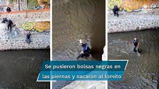 Elementos policiales acudieron a la zona para localizar al perrito que se encontraba entre las aguas negras y comenzar las labores de rescate