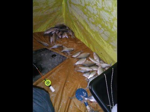 рыбалка в кронштадте летом