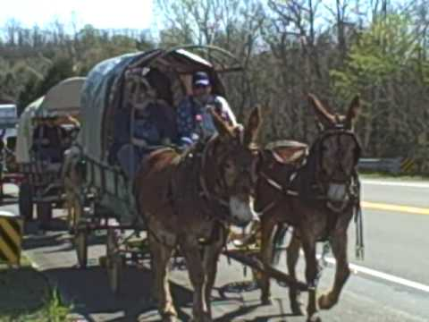 Mule Day Wagon Train