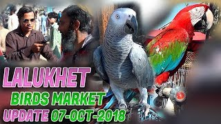 Lalukhet Sunday Birds Market 7-10-2018 Latest Updates (Jamshed Asmi Informative Channel)  Urdu/Hindi