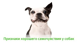 Признаки хорошего самочувствия у собак. Ветеринарная клиника Био-Вет.