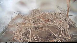 Nesting Platform