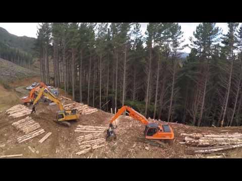 Logging east coast new zealand (potikirua)