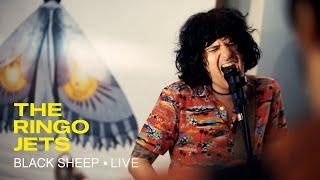 THE RINGO JETS - Black Sheep (Live Session)