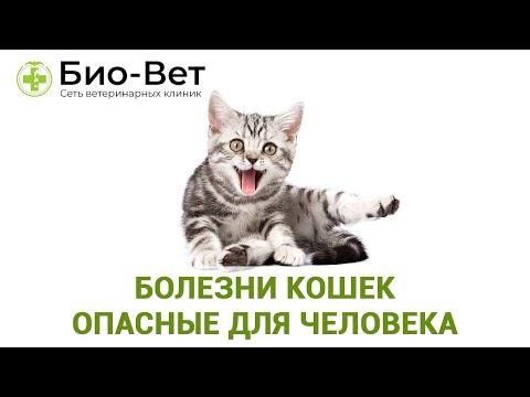 Болезни Кошек Опасные Для Человека& Топ-8 Заразных Болезней От Кошки. Ветклиника Био-Вет