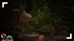 Meet a gay Flamingo couple at the Denver Zoo who are 'living their best lives'