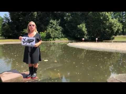 StopptRückwürfe: Christine Urspruch springt ins Wasser!