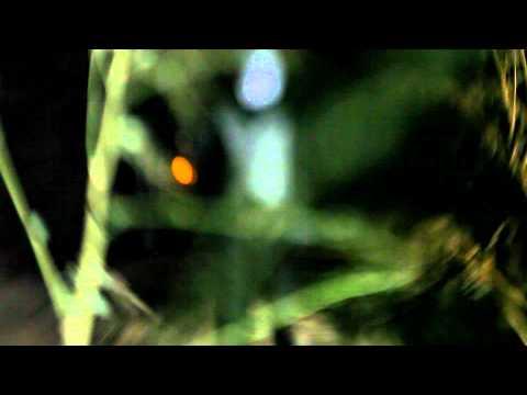 VILDHJARTA - Benblåst (OFFICIAL VIDEO)